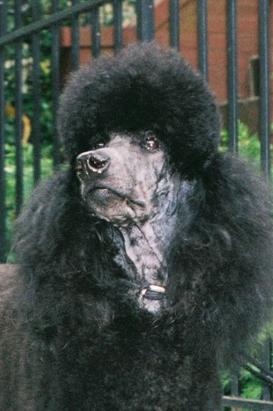 Dog Grooming-General