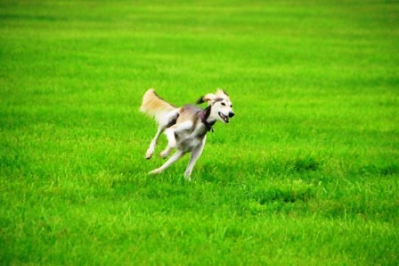 Raja loves to run